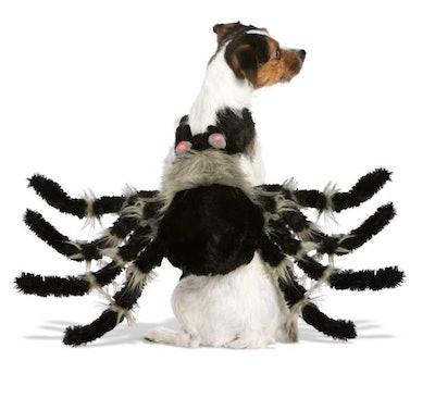 Halloween Spider Pet Costume