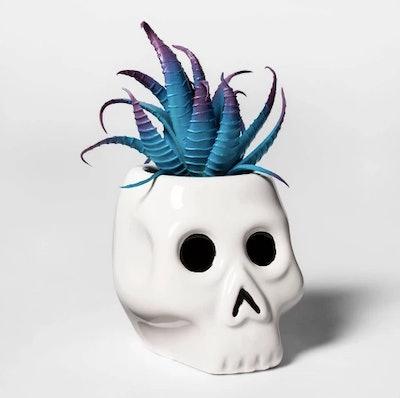 Skull Halloween Succulent White