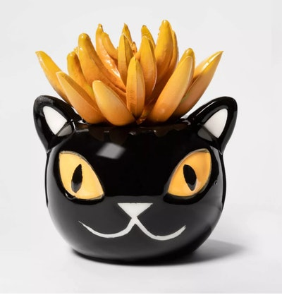 Black Cat Halloween Succulent