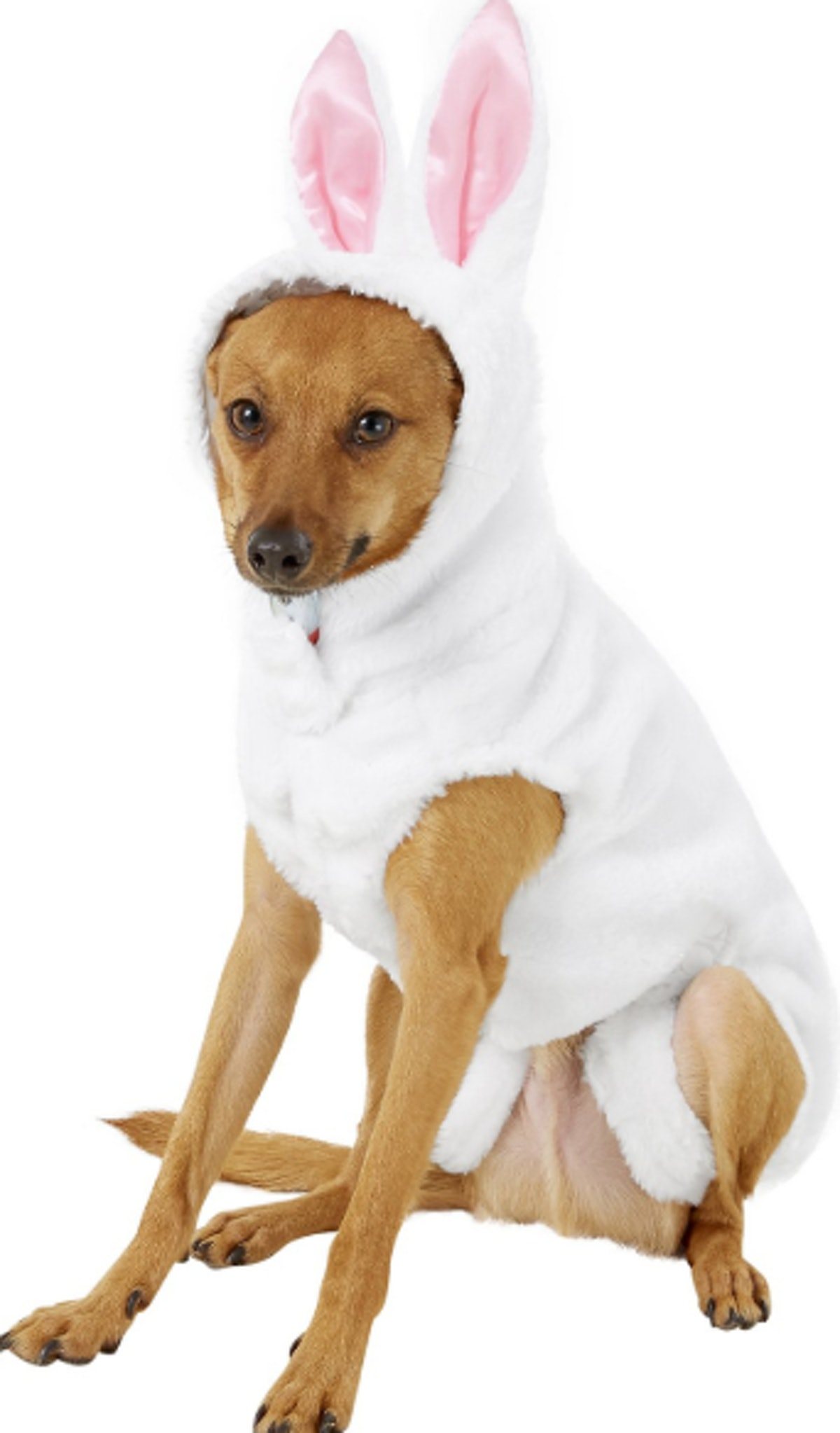 Rubie's Costume Company Bunny Dog Costume