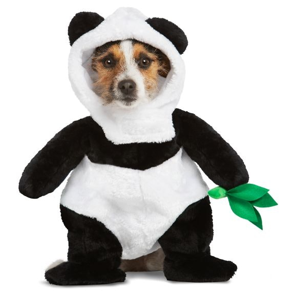 8 cute dog costumes for halloween 2019 that 39 ll make you swoon my travel leader - Panda team leader costume ...