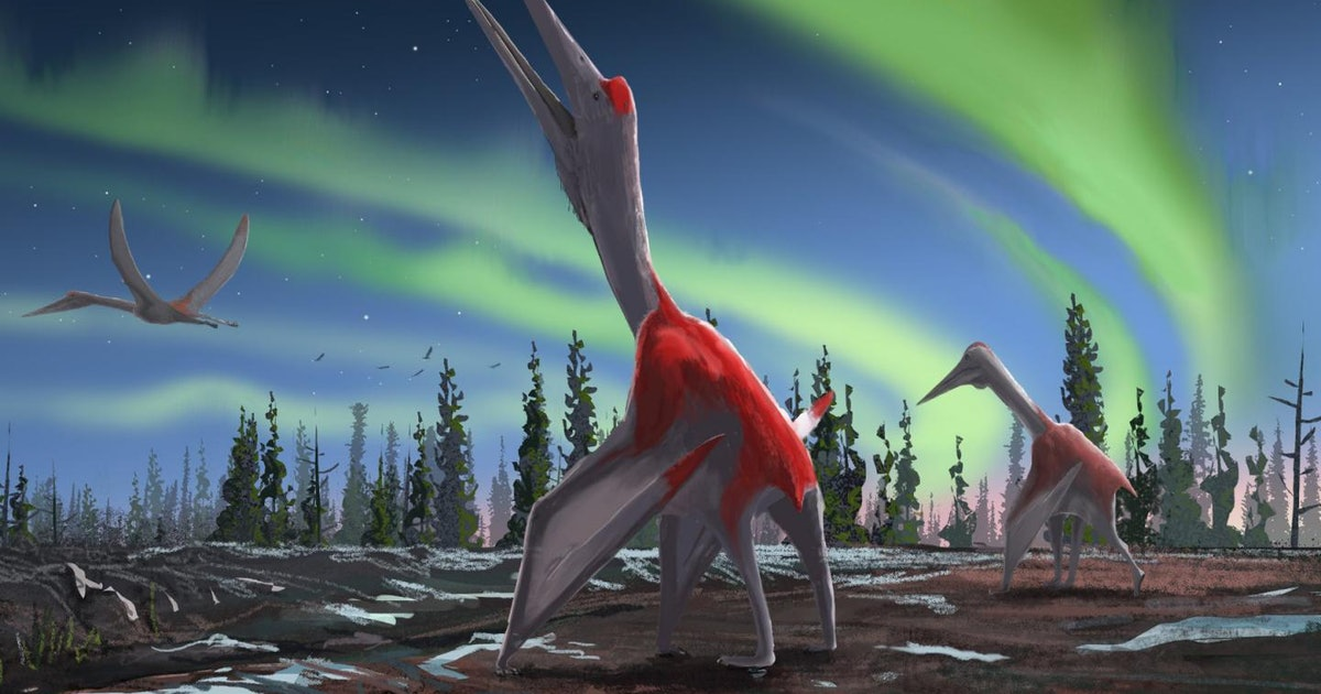 """Prehistoric """"flying dragon of the north"""" identified by scientists at USC"""
