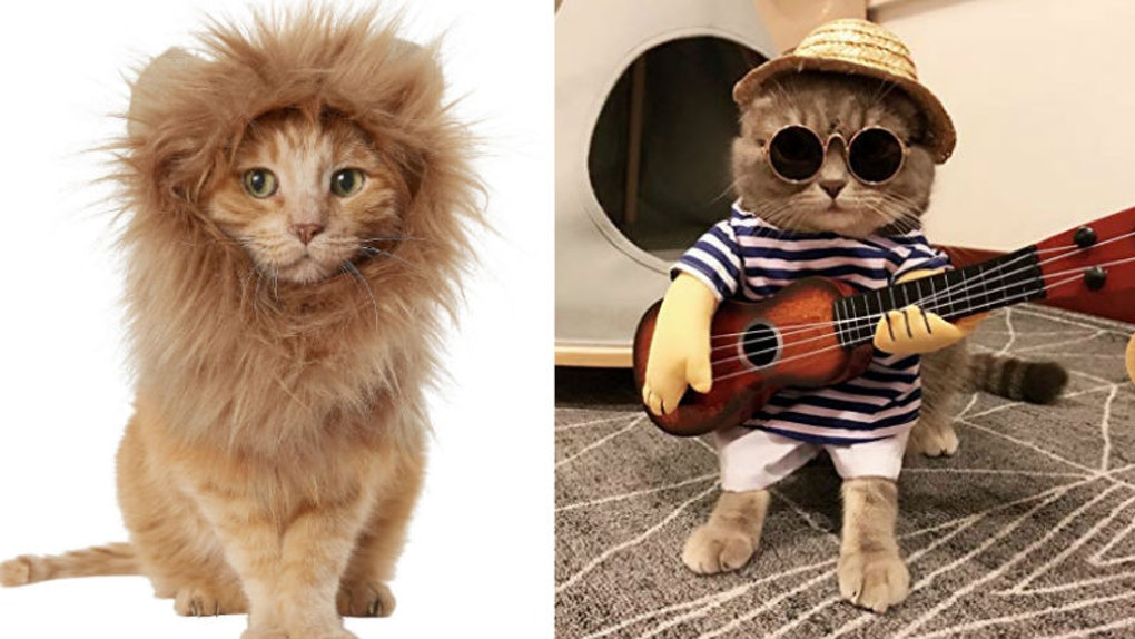 8 Cute Cat Costumes For Halloween 2019 That Are Just Purrfect