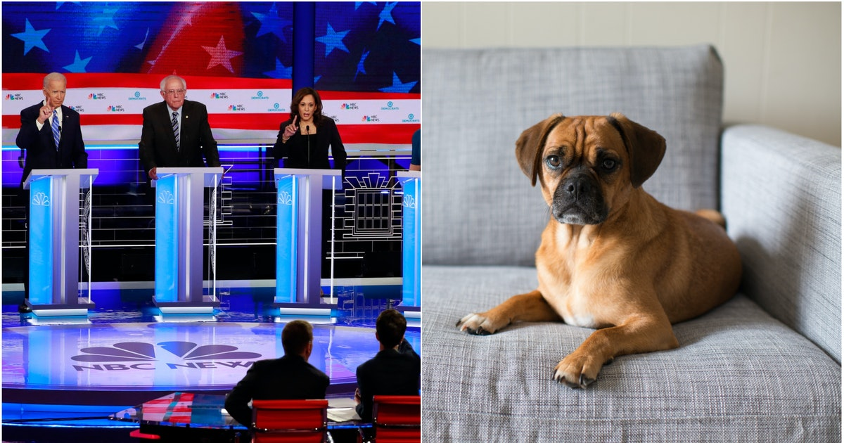 Dogs watching the debates might be the key to surviving the 2020 election