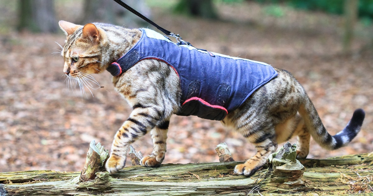 The 4 Best Cat Harnesses