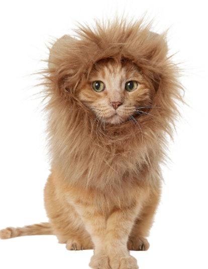 Frisco Lion Mane Dog & Cat Costume