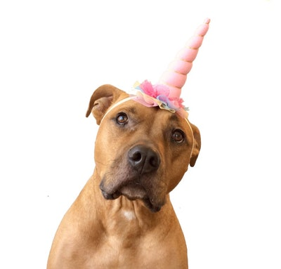 Pink Unicorn Horn Dog Headband Costume