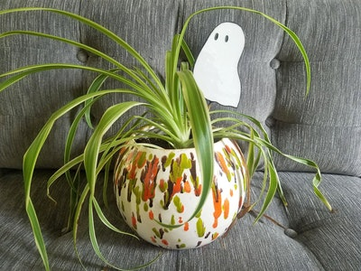 Ghost Buddy Plant Stake