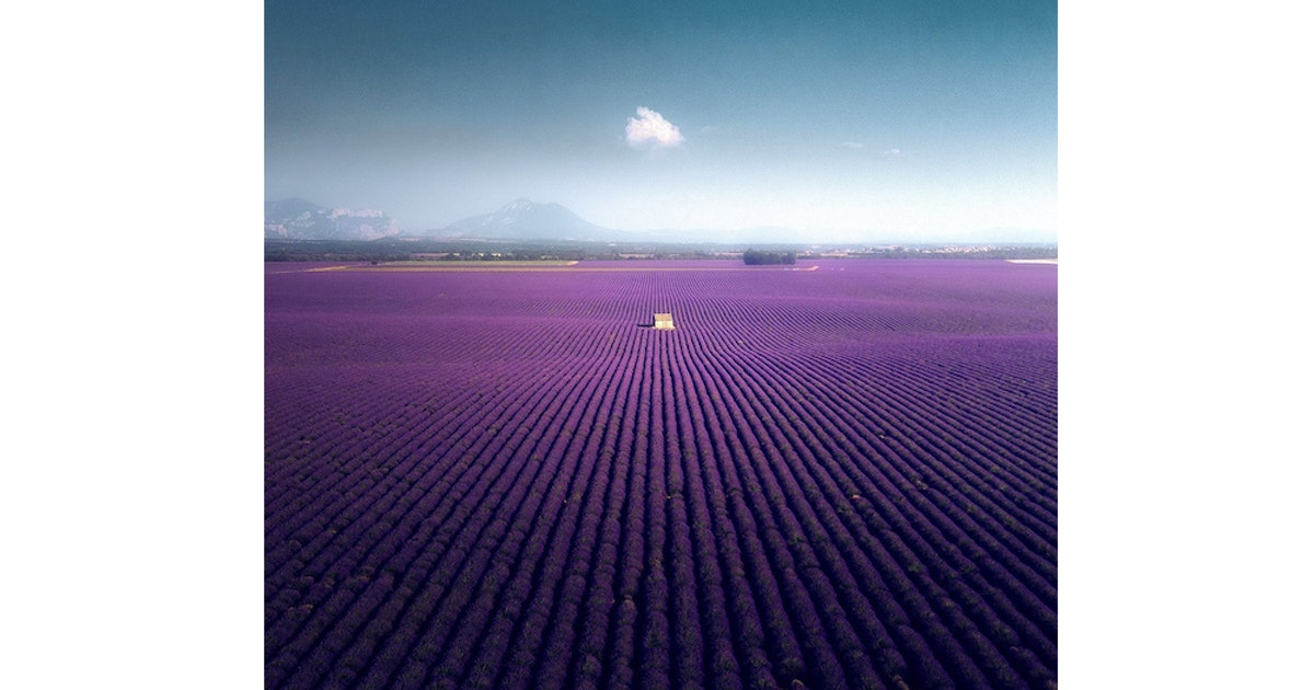 Gallery: The Lavender Fields of Valensole, France