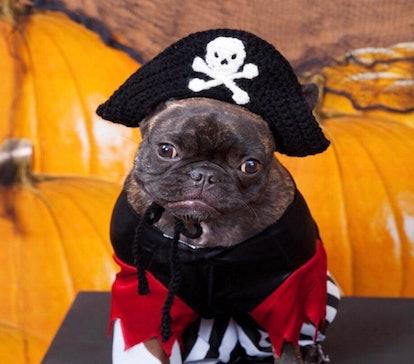Pirate Dog Hat, Dog Halloween Costume