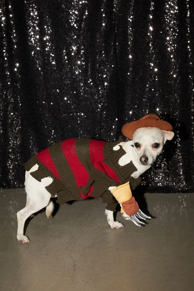 Freddy Kreuger Dog Halloween Costume