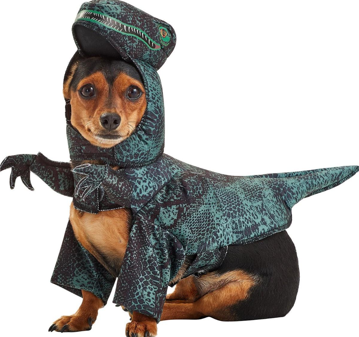 California Costumes Pupasaurus Rex Dog & Cat Costume