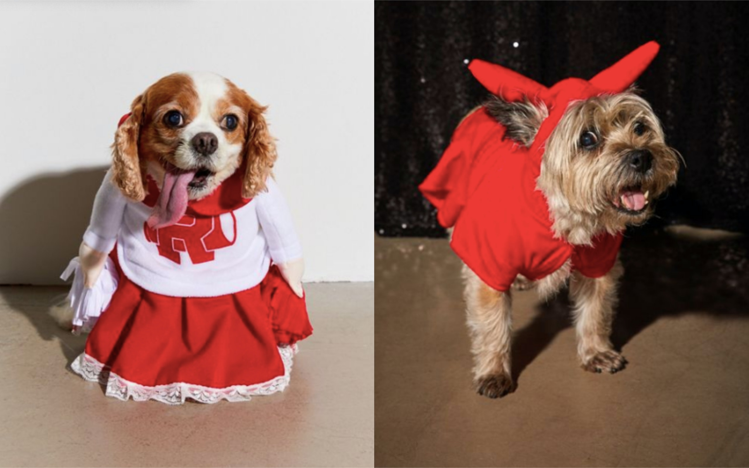 8 Dog Costumes For Halloween 2019 From Urban Outfitters
