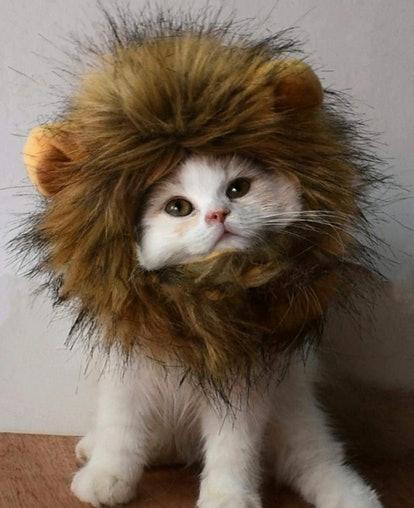 RosyLife Lion Mane Wig for Cat Costume