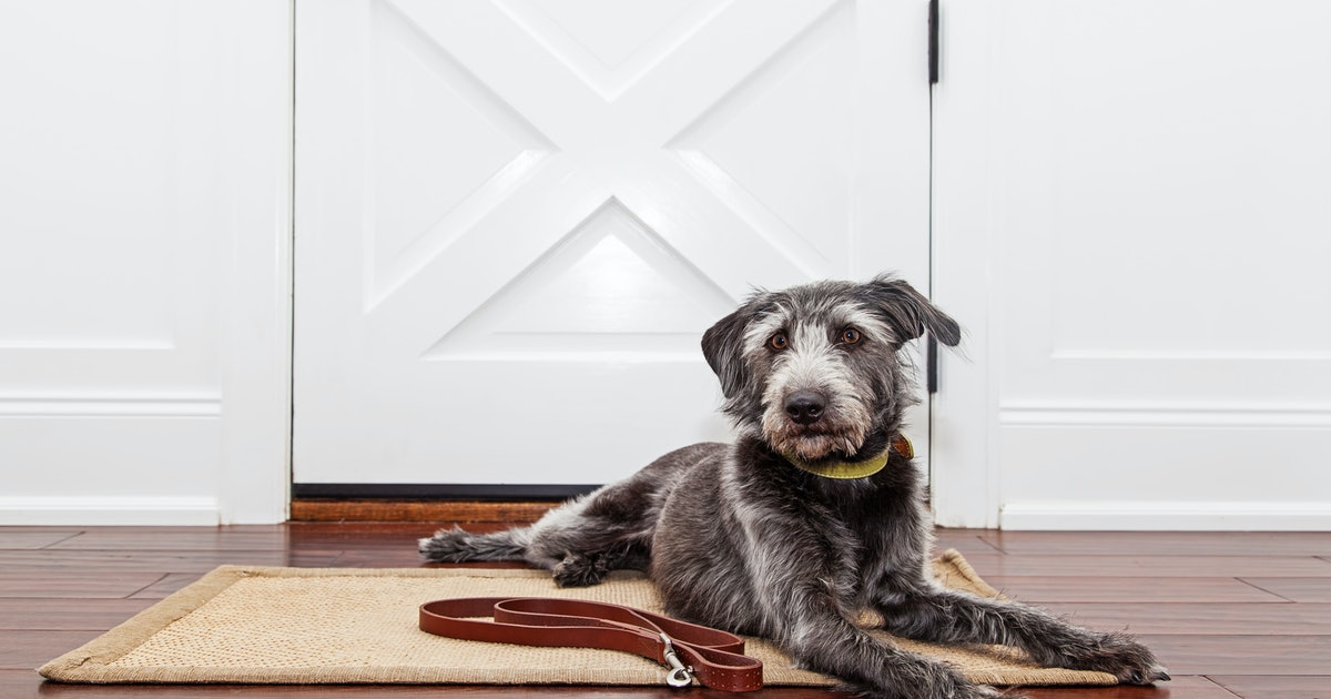 The 3 Best Doormats For Dogs