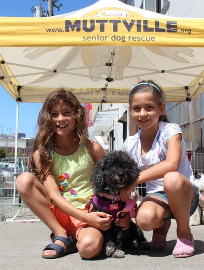 Rescuing an older dog when you have kids is possible when you learn about the dog's temperament prior to adopting.