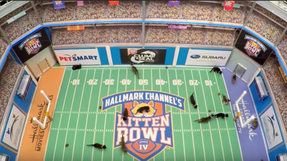 The 2020 Kitten Bowl will air on The Hallmark Channel during Super Bowl Sunday on Feb 2, 2020.