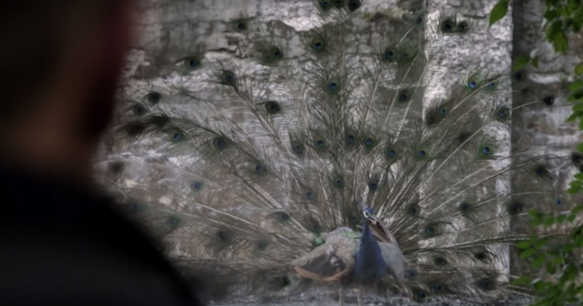 What Does The Peacock Mean On 'Manifest'? It May Relate To The Death Date