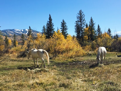 Horses graze in a Colorado valley below snow-capped peaks