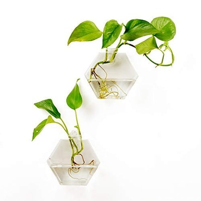 Fashionstorm Glass Vase (2 Pack)
