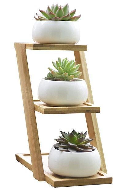 Jusalpha Succulent Plant Pot (Set of 3)