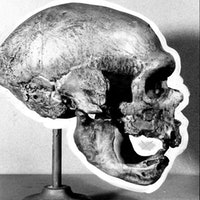 5 theories on why Neanderthals went extinct