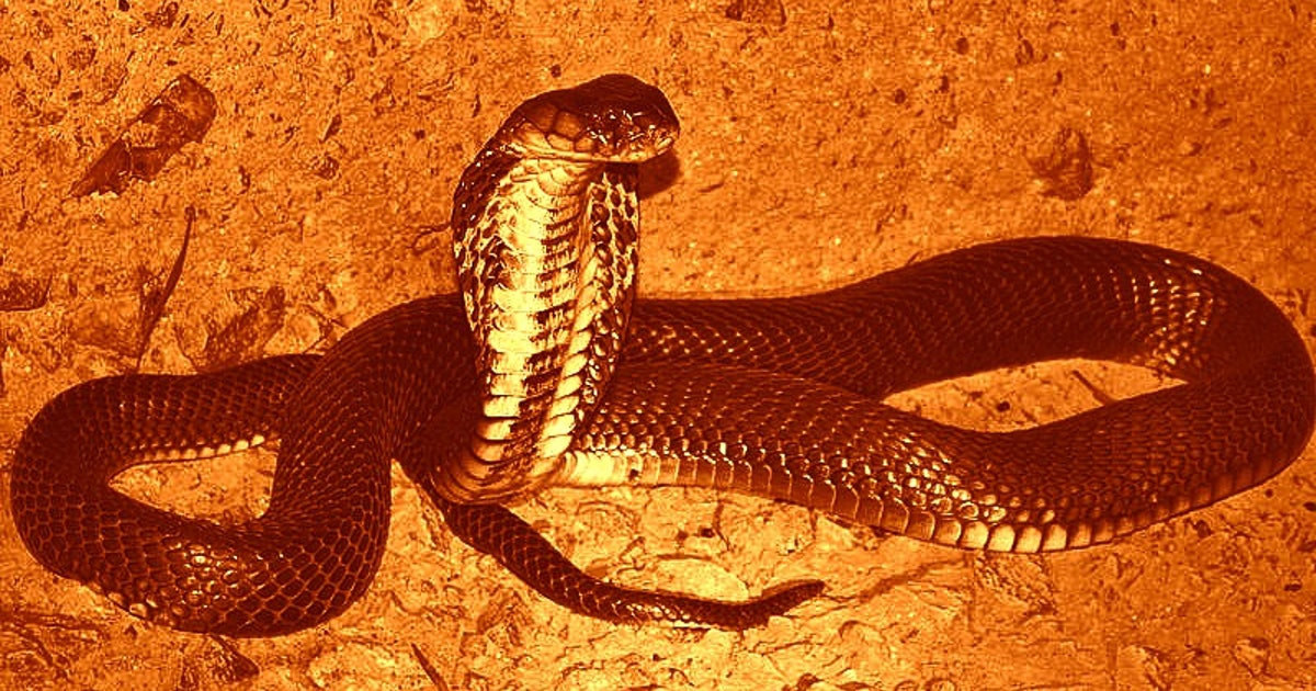 Why snakes could have transmitted coronavirus to humans