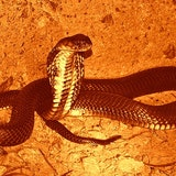 Controversial theory explains the link between Wuhan coronavirus and snakes