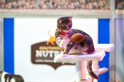 The second annual Cat Bowl will air on the Hallmark Channel on Saturday, Feb. 1.