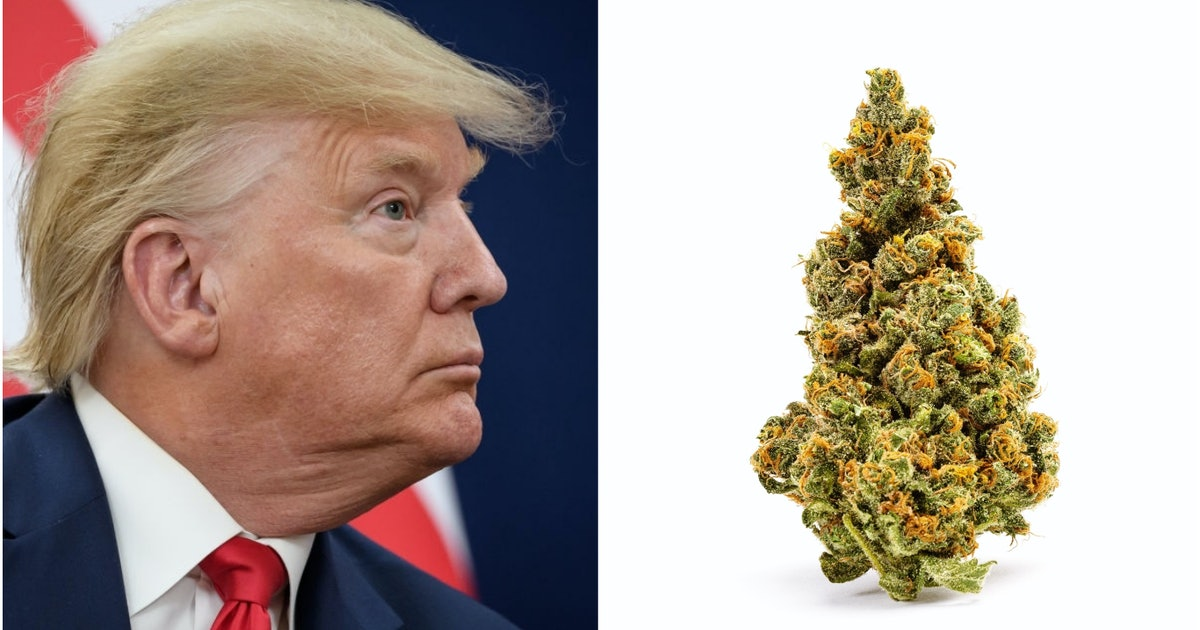 Trump apparently thinks weed makes you dumb. Experts disagree