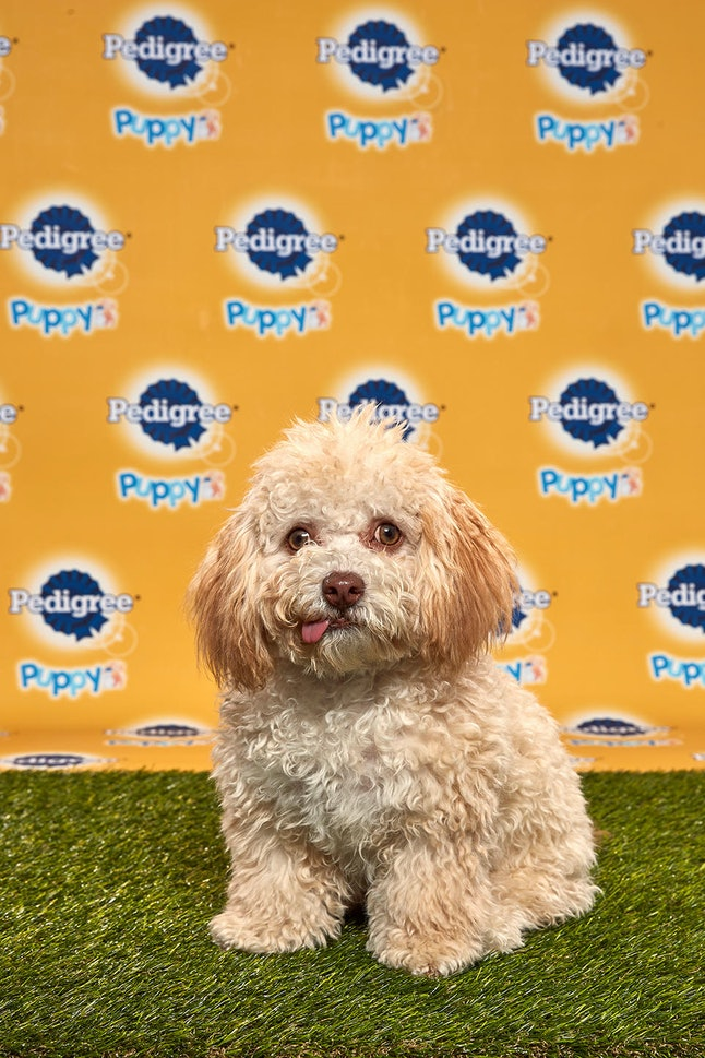Huck in the 2020 Puppy Bowl