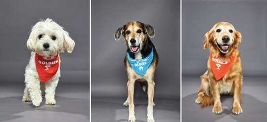 Older dogs compete in the third annual Dog Bowl on Feb. 2