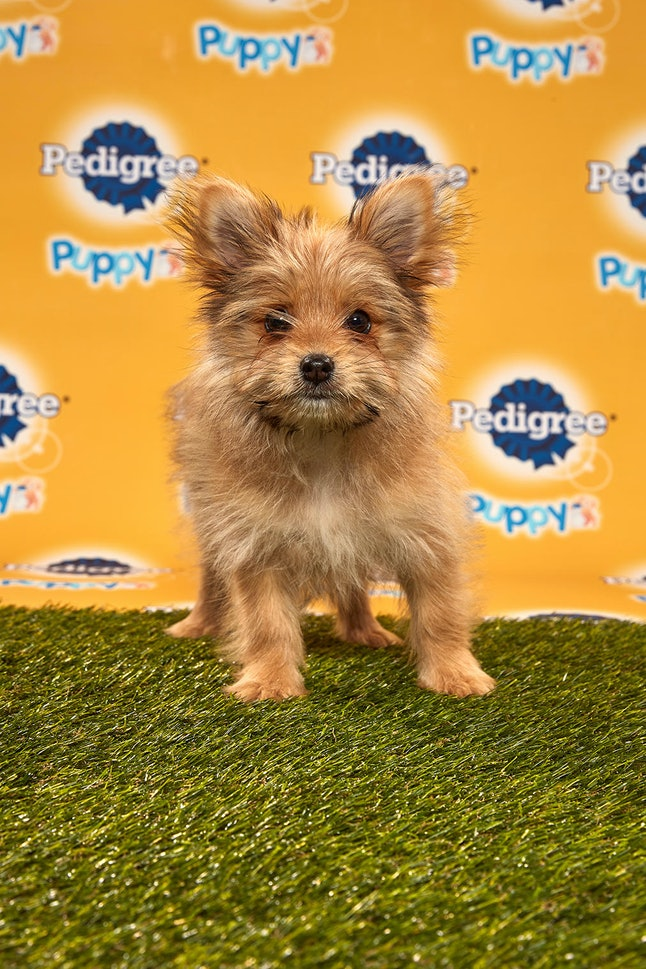 Linus in the 2020 Puppy Bowl