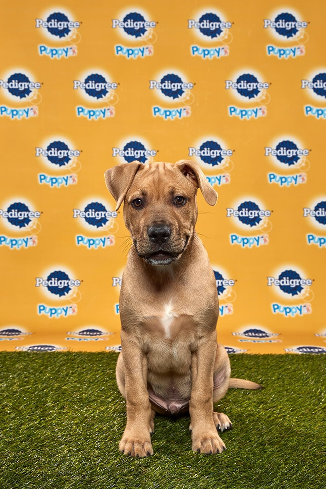 Kingery in the 2020 Puppy Bowl
