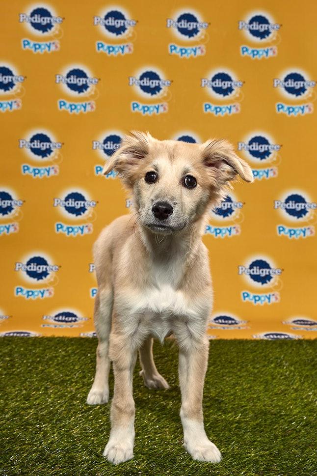 Starla in the 2020 Puppy Bowl