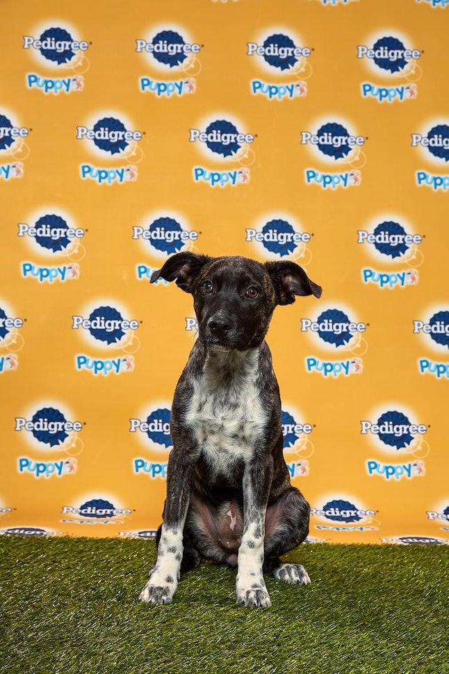Mocha in the 2020 Puppy Bowl