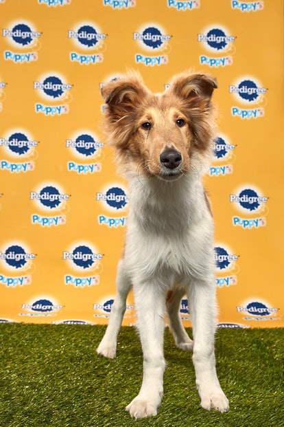 Duncan in the 2020 Puppy Bowl