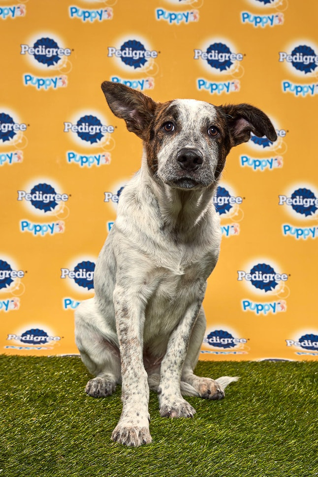 Rocky Road in the 2020 Puppy Bowl