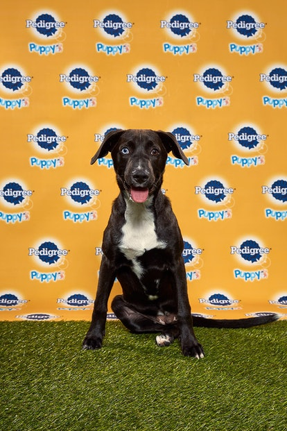 Ferris in the 2020 Puppy Bowl