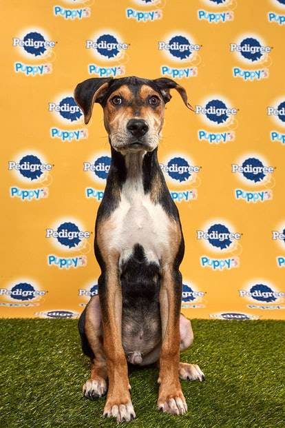 Coach in the 2020 Puppy Bowl
