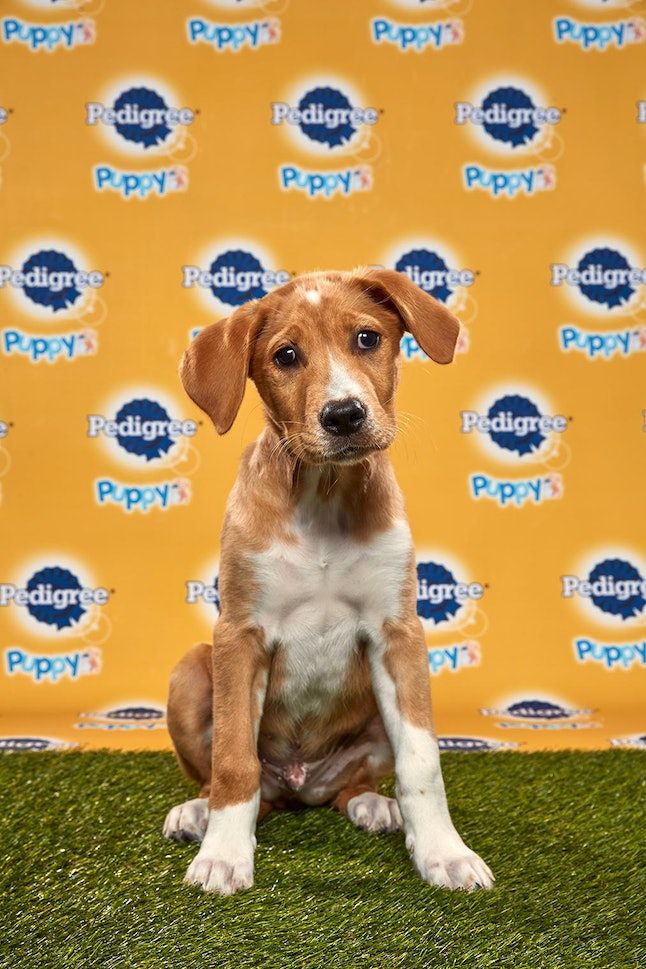Kenny in the 2020 Puppy Bowl
