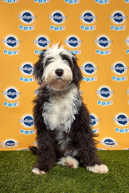 Candy in the 2020 Puppy Bowl