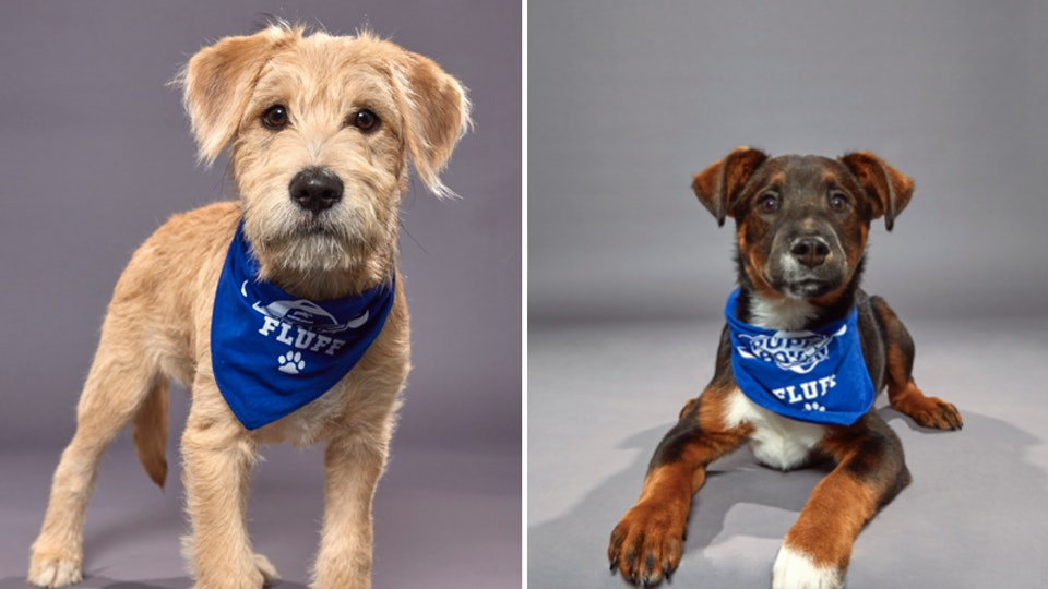 The 2020 Puppy Bowl will be broadcast on Animal Planet on Sunday, Feb. 2.