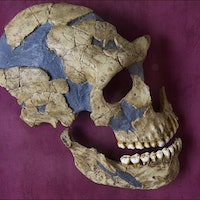 Everyone is a little Neanderthal, new study proves