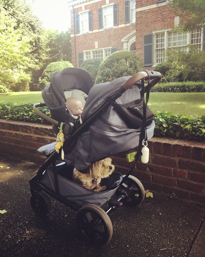 A stroller with baby and dog