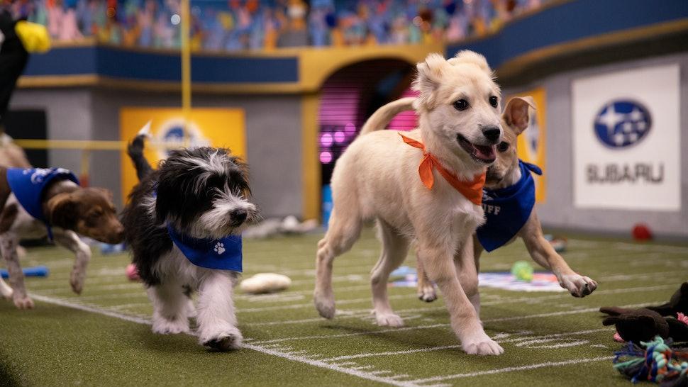 PBXVI Puppy play time 3