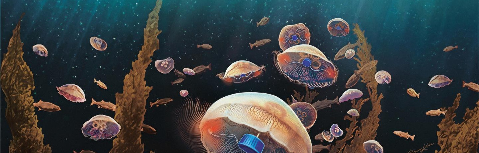 An artist's rendering of jellyfish augmented with the implant designed by Xu and Dabiri.