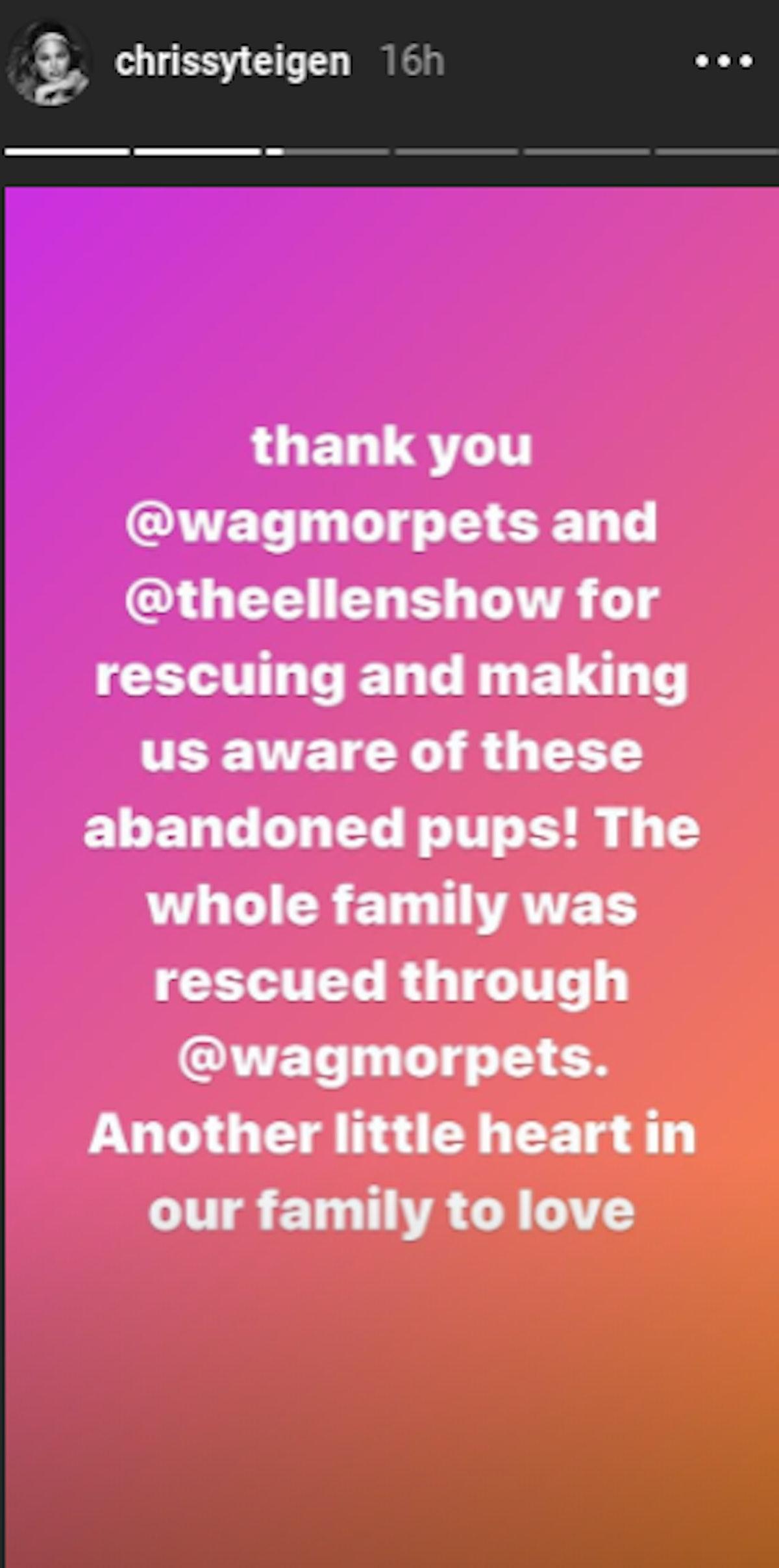Wagmor Pets Chrissy Teigen