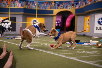 Puppy Bowl 2020 will air on Animal Planet with puppies from Team Ruff and Team Fluff