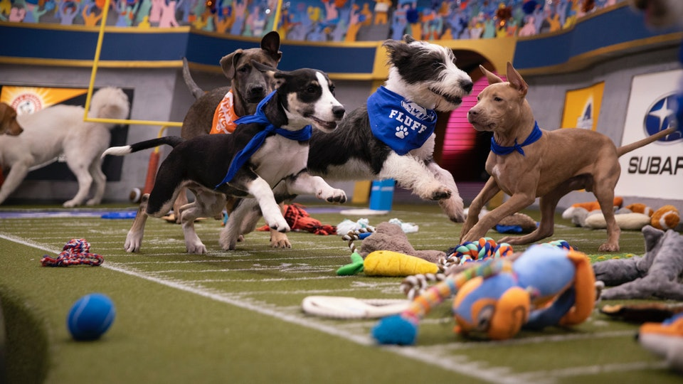 Puppy Bowl 2020 will air on Feb. 2 on Animal Planet.